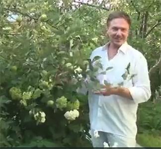 Cтихотворение Яблочный спас, читает автор - скульптор Дмитрий Кукколос